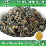 Extrait naturel de thé de 100% Oolong (30-90% polyphénols)