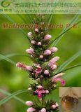Het Natuurlijke Organische Motherwort Herb P.E.- Uittreksel van uitstekende kwaliteit