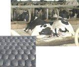 小石ゴム製牛マット