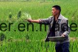 Аграрная ранг/промышленное удобрение мочевины 46% ранга