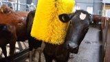 Moteur de balai de vache à machine de nettoyage de ferme