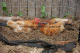 Плетение провода курятника цыпленка высокого качества шестиугольное