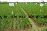 Классификация азотных удобрений Мочевина 46% (растительной пищи) по хорошей цене