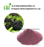 Extrato 25%Anthocyanidins do negro do Sambucus do ingrediente erval de Changsha