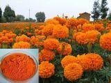 Pó do Lutein do extrato do Marigold/extrato flor do Marigold