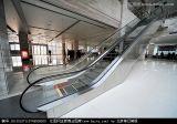 Rolltreppe-Geschwindigkeit 0.5 und 1000mm