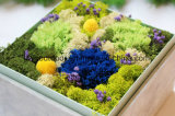 Regalo de boda hecho a mano preservado de la flor del clavel natural
