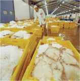 Máquina de gelo do floco de 2 toneladas (LLC) para peixes
