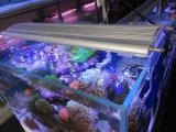 マリンの珊瑚礁のためのベストセラーWhite+Blue LEDのアクアリウムライト
