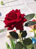 Qualitäts-reale Note Silartificial Rose Blumen-Fälschungs-Blume für Hochzeits-Ausgangsdekoration