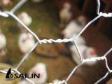 Parete della paglia del recinto di filo metallico del pollo di Sailin
