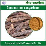 Het Poeder van Cynomorium van Songaria, het Uittreksel van Songaria Cynomorium