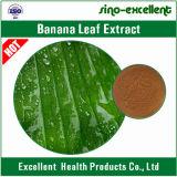 Polvere naturale dell'estratto del foglio della banana di 100%