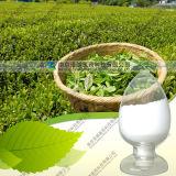 Polifenolo del tè dell'estratto 40% ~98% del tè verde