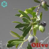 Estratto/oleuropeina/Hydroxytyrosol verde oliva del foglio