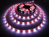 Lumière de bande de l'éclairage LED 24V/12V 5050SMD DEL