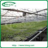 Sistema de irrigación de regadera para la irrigación del invernadero
