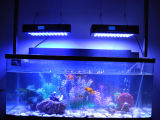 Fish TankのためのIt2080 240W Full Spectrum LED Aquarium Lighting