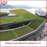 Sbs a modifié la membrane imperméable à l'eau de bitume pour le toit planté