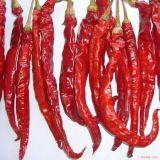 Dp (desidratado) New Crop Red Chili