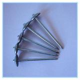 Clorful Regenschirm-Kopf-Dach-Nagel in der Qualität und im konkurrenzfähigen Preis