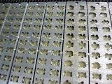 사탕 제작자 사탕 공정 라인 예금된 곰 묵 사탕 생산 라인 (GDQ300)