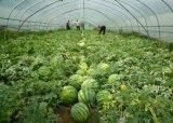 PVC 직물을%s 가진 2016 베스트셀러 정원 농업 온실