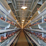 Gabbia automatica del pollo della strumentazione del pollame per uso dell'azienda agricola