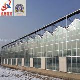 Invernadero Venlo Tipo de vidrio de vehículo y de Crecimiento de flores