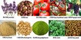 Gelbholzrinde-Öl-überkritische flüssige Extraktion-Pflanze