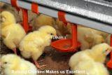 Горячий тип автоматическая клетка h сбывания цыпленка для птицефермы