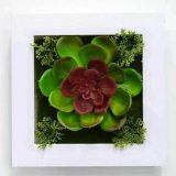 Piante e fiori artificiali delle piante Gu-Jy23212546 del Succulent