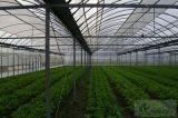 Estufa quente do jardim do túnel da tampa do PE da venda com sistema refrigerando da almofada