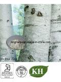 벌치나무 껍질 추출, Betulin 90%, HPLC CAS의 98%: 473-98-3