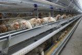 Ferme avicole/jeté pour le poulet d'éleveur de couche de grilleur