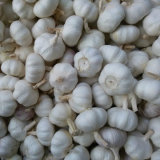 Karton Packing Pure White Garlic (5.5cm und up)