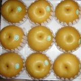 Qualität frische chinesische Fengshui Birne