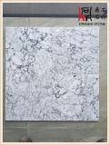 Losas de mármol blancas grises blancas de Praga para la encimera del mosaico del suelo