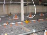 Equipamentos de alimentação da galinha automática para a produção da grelha