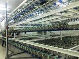 Máquina automática de Slauggtering de las aves de corral de Qingdao, China