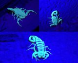 12 LEIDENE UVToorts om Ultraviolet van Blacklight van de Detector van de Schorpioen van de Urine van de Vlek Flitslicht te vinden