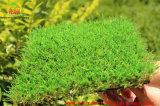 Горячее украшение сбывания и фабрика травы ландшафта искусственная сразу