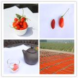 Goji organique Berry de 450grains/50g