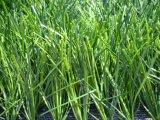 Het Kunstmatige Gras van het Gras van de voetbal voor het Gebied van de Voetbal (MD001)