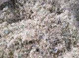 PP/PE FilmかWeaving Bag Crushing Washing Drying Production Line