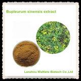 Polvo orgánico natural del extracto de Bupleurum Sinensis de la alta calidad