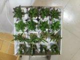 Piante e fiori artificiali di mini pianta Gu-SD0308 succulente