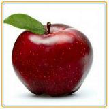 缶詰にされたりんごの最初の販売