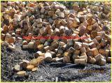 L'acero si ramifica tagliatrice di legno
