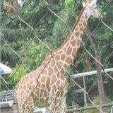 동물원 스테인리스 밧줄 메시 담 Ss 코드에 의하여 길쌈되는 메시